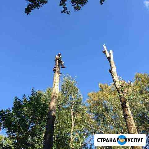 Спил деревьев любой сложности Вологда
