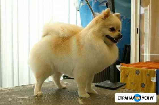Маленькая прелесть салон стрижка собак и кошек Курск