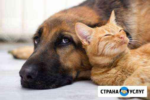 Передержка домашних животных, выгул Киров