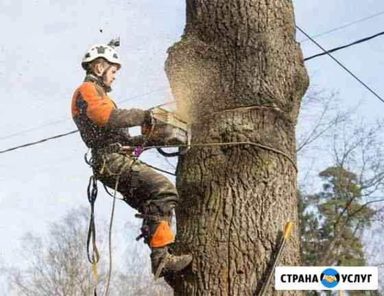 Спил деревьев Моздок