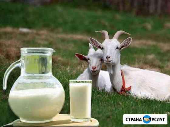 Продажа козьего молока с доставкой Ульяновск