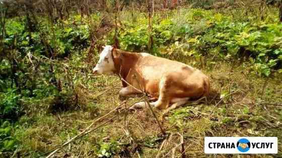 Кастрация котов, хряков и быков. Лечение онлайн Саратов