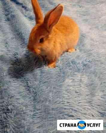 Аренда кролика Саранск