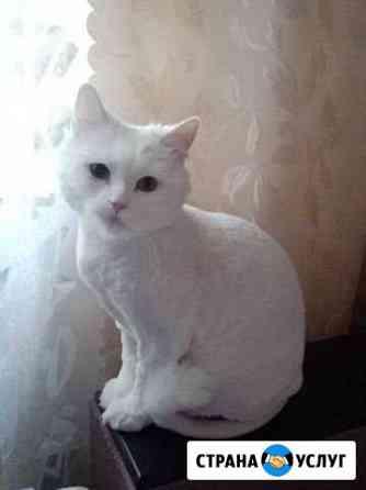 Стрижка кошек с выездом к клиенту Череповец
