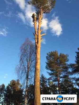 Спил деревьев Петрозаводск