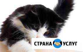 Передержка вашей любимой кошечки Мурманск