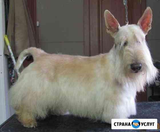 Профессиональный тримминг и стрижка собак Новосибирск
