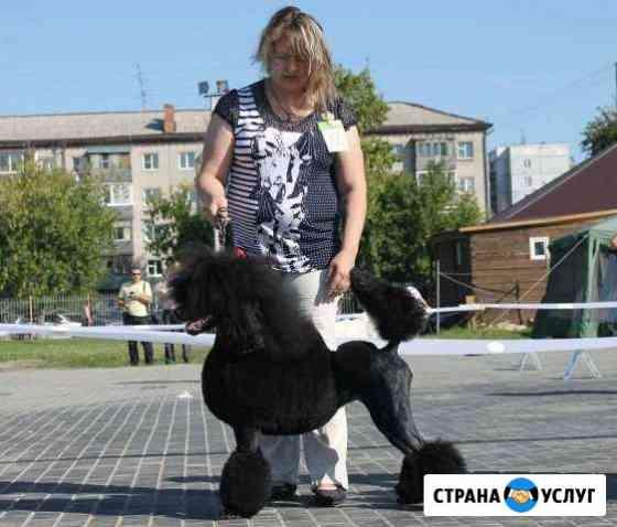 Стрижка домашних животных Барнаул