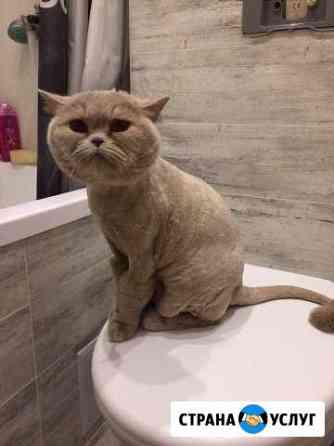 Стрижка котов и кошек Калининград