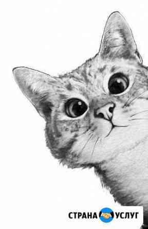 Стрижка кошек Ижевск