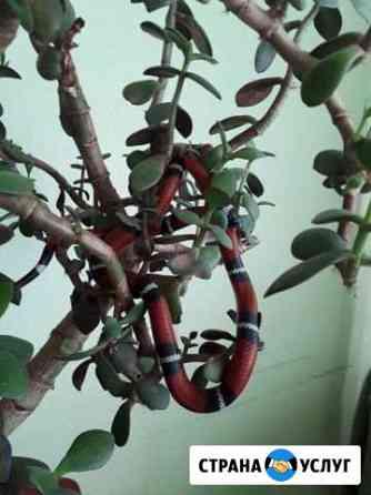 Аренда змеи для фотосессий Иркутск