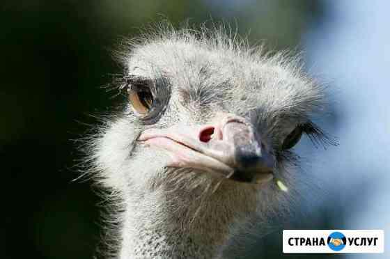Фотограф для Вас Ярославль