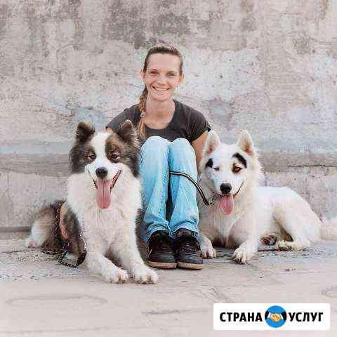 Дрессировка, воспитание щенков, выгул собак Мурманск