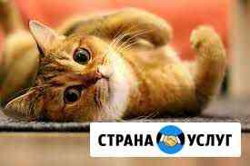Передержка кошек Тюмень
