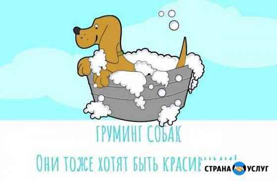 Груминг собак Добрунь