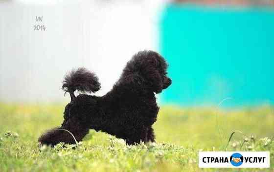Стригу собак Вольск