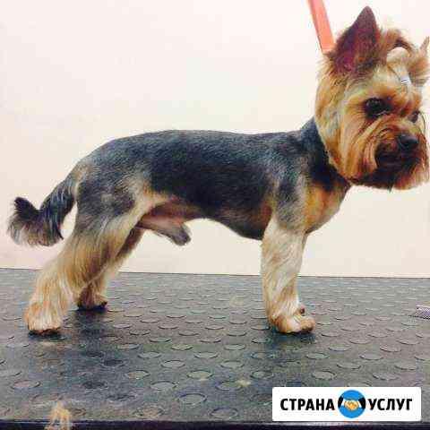 Стрижка собак, расчесывание, уход Воронеж