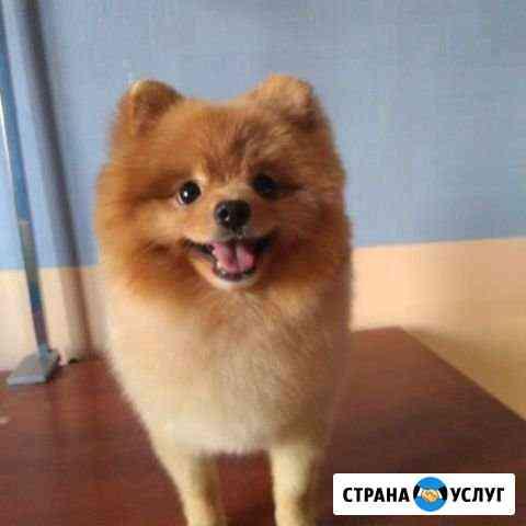 Груминг, стрижка собак Красноярск