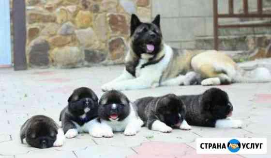 Вязка собак. Инструктор Курск