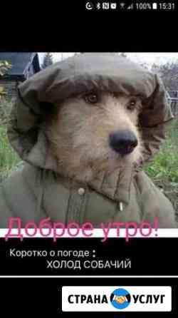 Зооняня Владикавказ