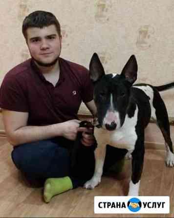 Передержка собак Новосибирск