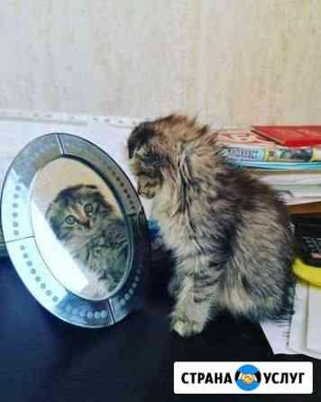 Передержка кошек и собак Уфа