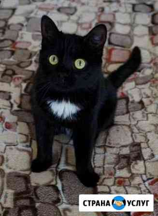 Стерилизация кошки Омск
