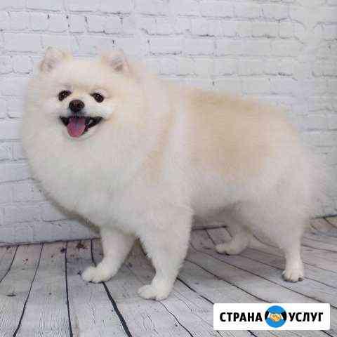 Стрижка собак и кошек Новосибирск