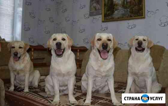 Гостиница для собак и кошек Чебоксары