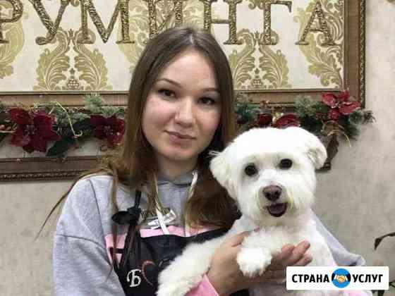 Груминг Стрижка собак Шуя