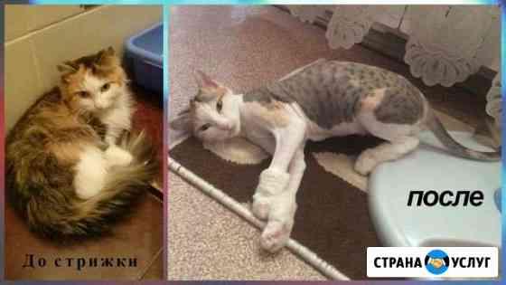Стрижка кошек и собак (всех пород), выезд Саратов