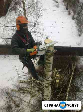 Спил деревьев, кронирование, обрезка Брянск
