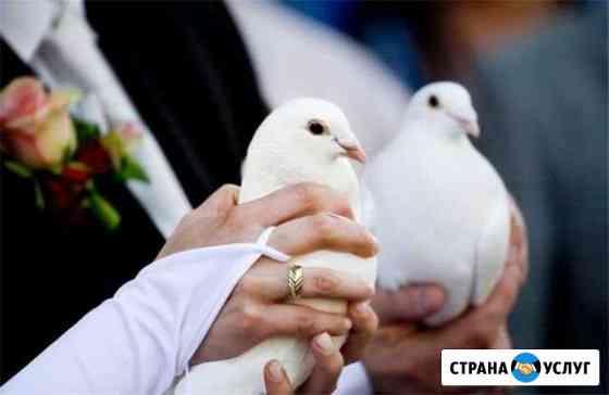 Белые голуби на свадьбу Железногорск