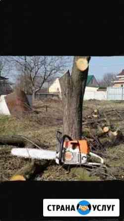 Спил деревьев Исламей