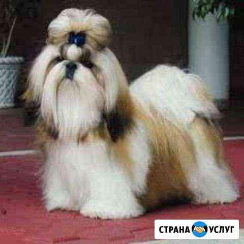 Стрижка собак Новомосковск