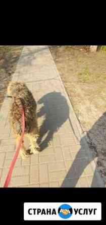 Выгул собак Тамбов