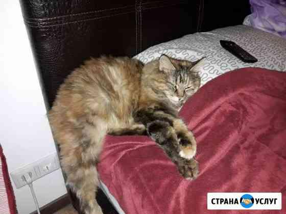 Передержка домашних любимцев Красноярск