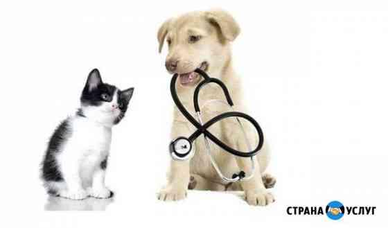 Ветеринарный врач на дом Хабаровск