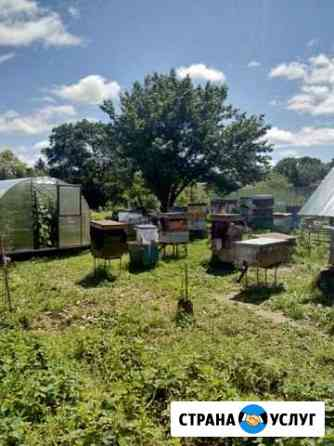 Продам липовый мёд Биробиджан