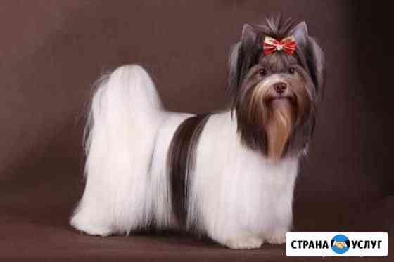 Профессиональная стрижка кошек и собак Оренбург