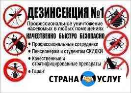 Уничтожение клопов, тараканов, крыс, мышей, клещей Северодвинск