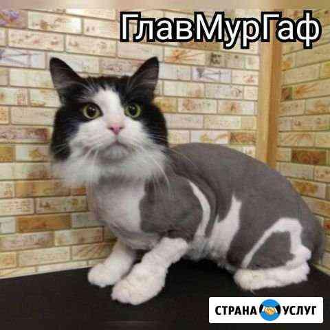 Стрижка кота кошки за 10-15 мин Калининград