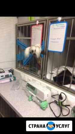 Оказываю ветеринарную помощь с выездом на дом Зубцов