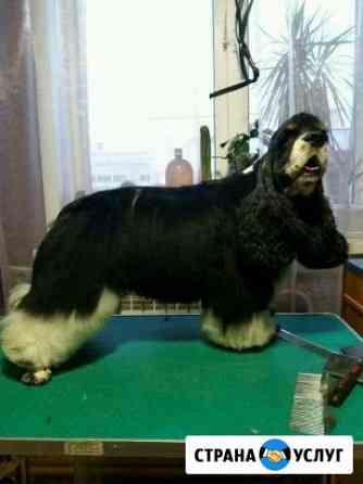 Стрижка собак и кошек Братск