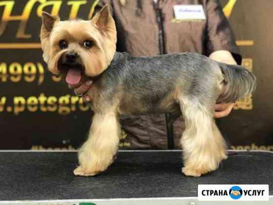 Стрижка собак, р-н Технологического университета Белгород