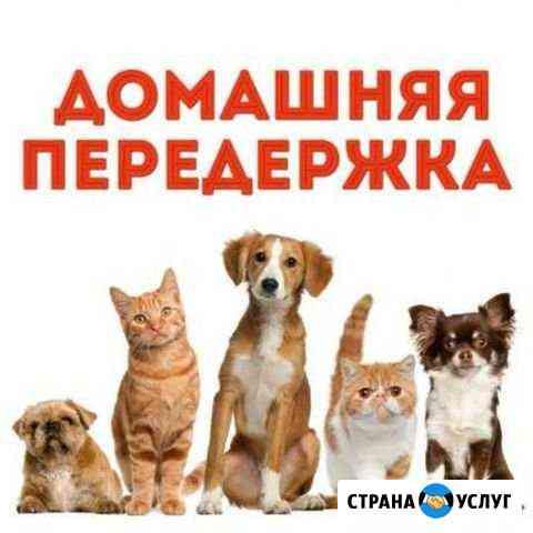 Передержка животных Алексин