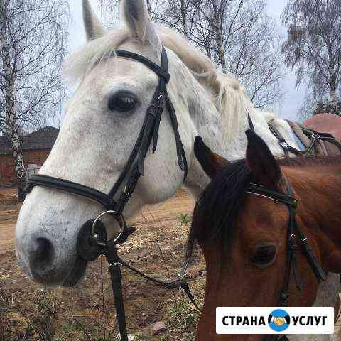Прогулки на лошадях,пони(конные прогулки) Иваново