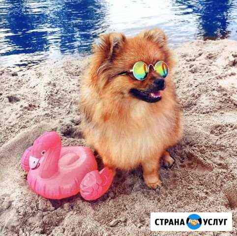 Собака для фотосессии Барнаул