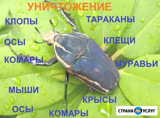 Уничтожение клопов, тараканов, муравьёв, клещей Тверь