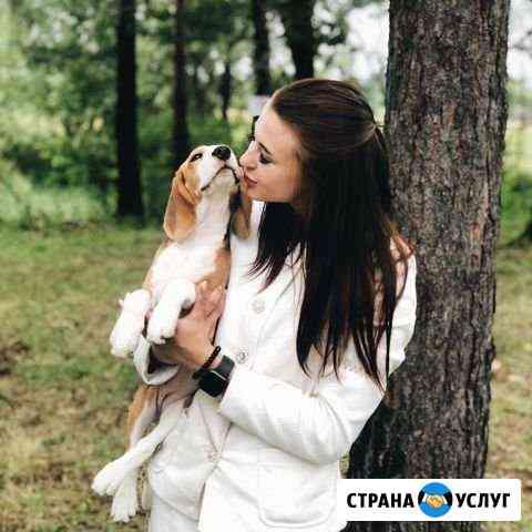 Хендлер (демонстрация собаки на выставке) Хабаровск